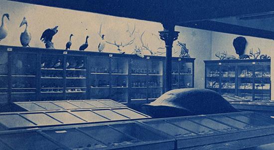 Museum interior PD-248-03ZOOM